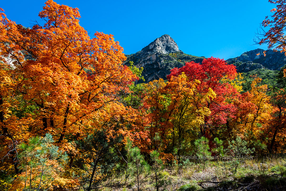 Couleurs automnales dans McKittrick Canyon, Guadalupe Mountains