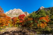 Arbres aux couleurs automnales dans McKittrick Canyon, Guadalupe Mountains