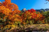 Explosion de couleurs automnales, McKittrick Canyon, Guadalupe Mountains