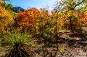 Végétation dense et colorée dans McKittrick Canyon, Guadalupe Mountains