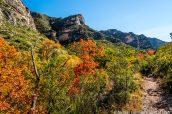 Montagnes de McKittrick Canyon dans leur environnement, Guadalupe Mountains
