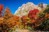 Paysage et végétation colorée de McKittrick Canyon dans Guadalupe Mountains National Park