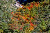 Détail des arbres colorés de McKittrick Canyon, Guadalupe Mountains