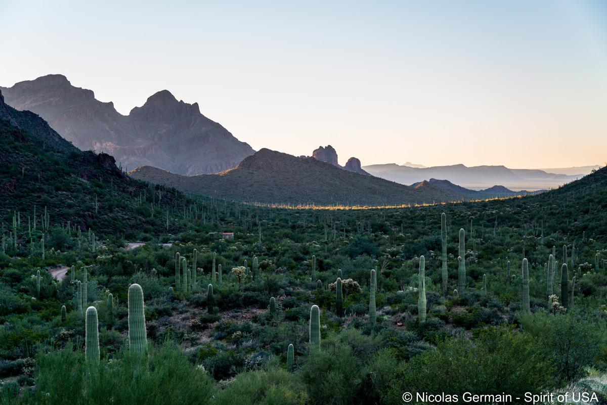Paysage le long de la piste Ajo Mountain Drive au milieu des Diablo Mountains, Organ Pipe Cactus