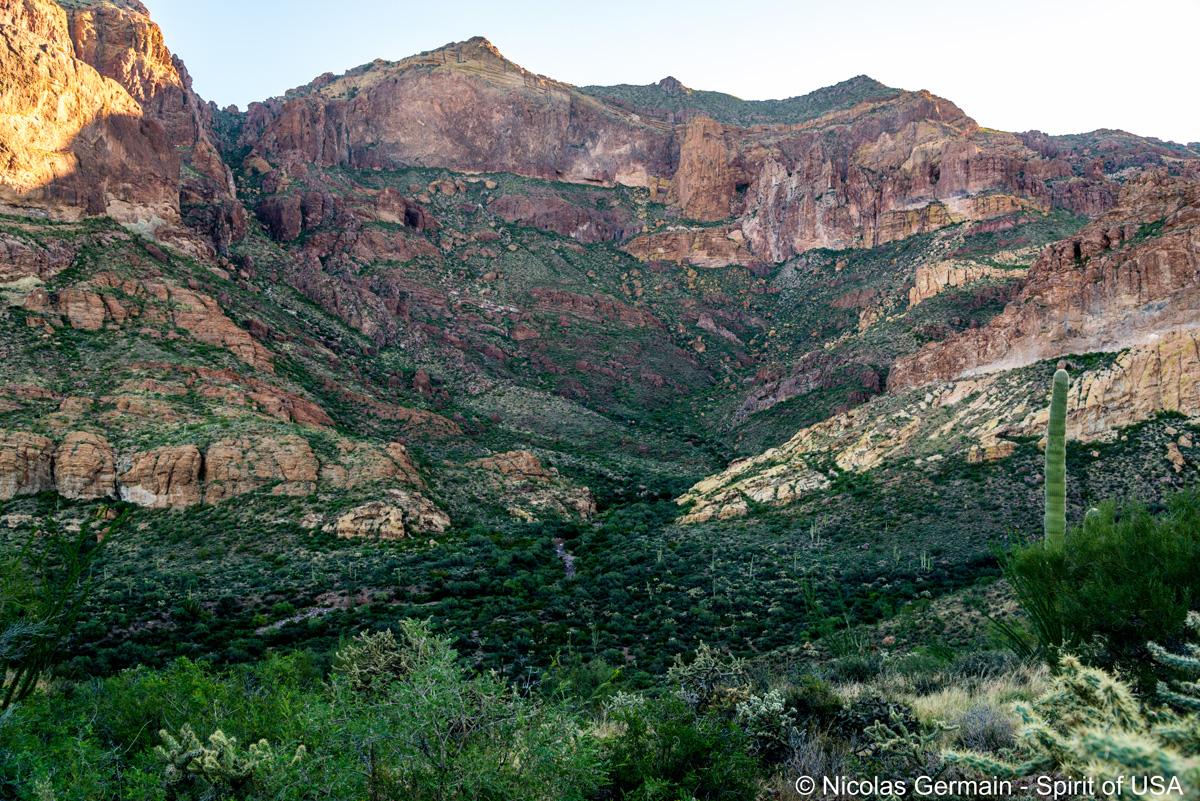 Estes Canyon et Ajo Mountains dans Organ Pipe Cactus