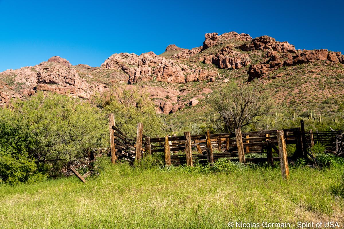 Ancien corral au bout d'Alamo canyon, Organ Pipe Cactus