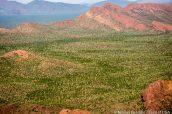 Milliers de saguaros dans la plaine vus de Bull Pasture, Organ Pipe Cactus