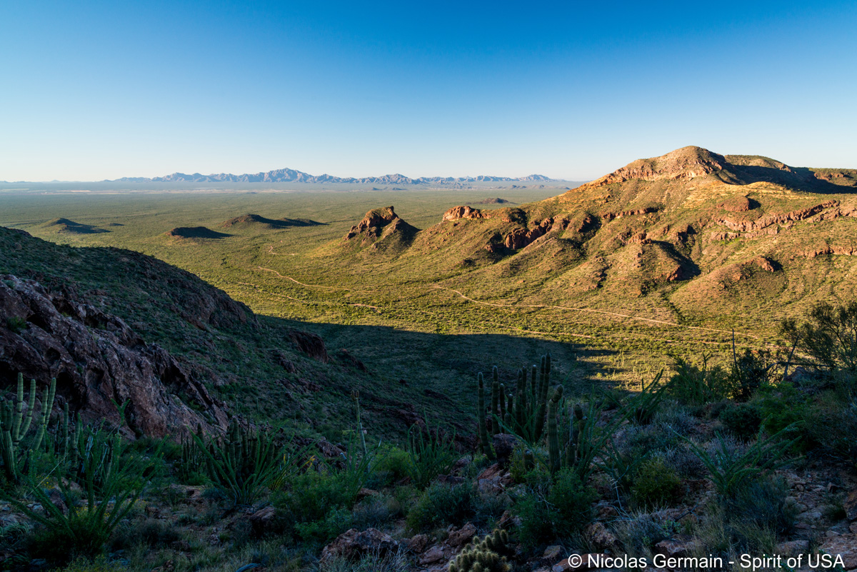 Vue sur le désert de Sonora en haut de Bull Pasture, Organ Pipe Cactus