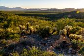 Paysage vu de Desert View Trail, Organ Pipe Cactus