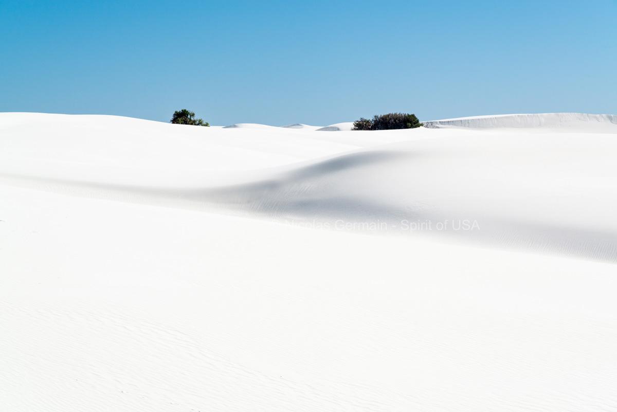 Végétation au milieu des dunes de gypse blanc de White Sands, Nouveau-Mexique