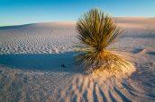Un Yucca au coucher de soleil de White Sands, New Mexico
