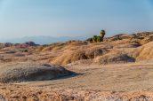 Les cinq palmiers de Five Palms au milieu du désert d'Anza Borrego
