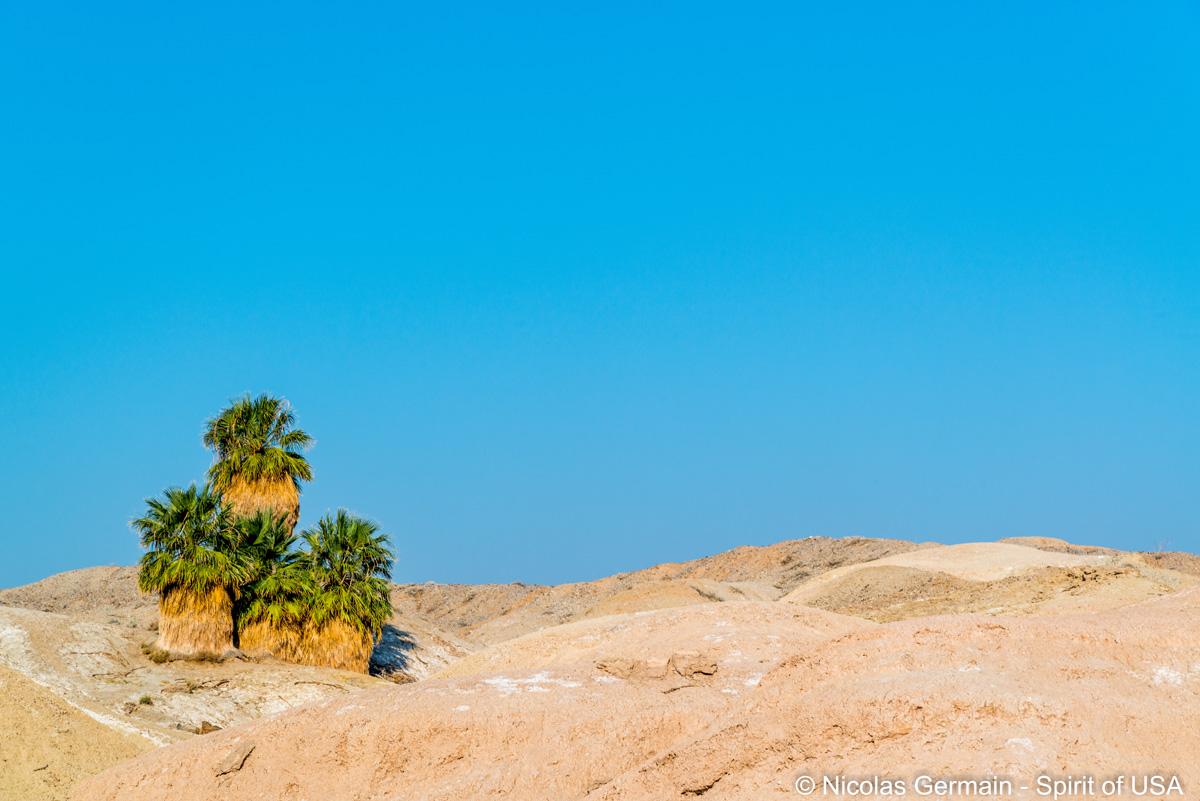 Mini oasis de Five Palms, Anza Borrego