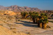 Oasis de Seventeen Palms dans le nord-ouest d'Anza Borrego, Californie