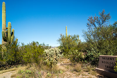 desert-ecology-trail