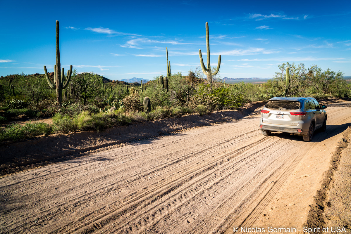 Bajada Loop Drive dans Saguaro National Park West