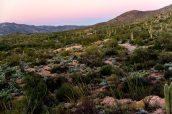 Cactus Forest Drive en fin de coucher de soleil, Saguaro East