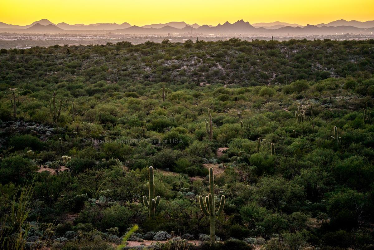 Panorama sur les montagnes et les environs de Tucson vus de Cactus Forest Drive, Saguaro East