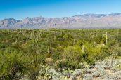 Vue sur les cactus et les montagnes Rincon en début d'après-midi, Saguaro East