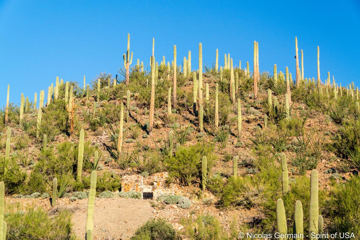 Petite ruine de pierres vue de Gould Mine Trail, Saguaro West