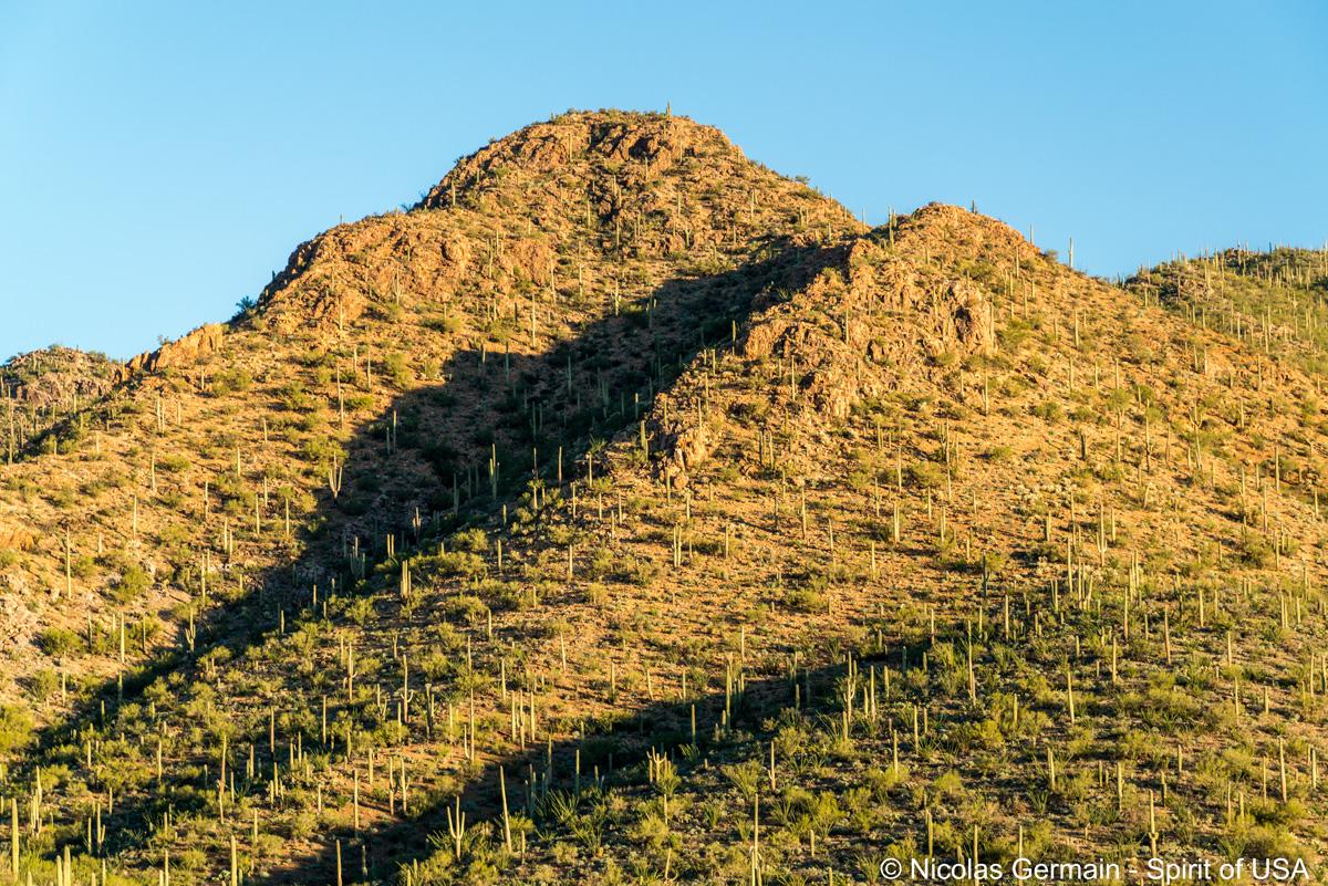 Saguaros à flancs de collines vus de King Canyon Trail, Saguaro West