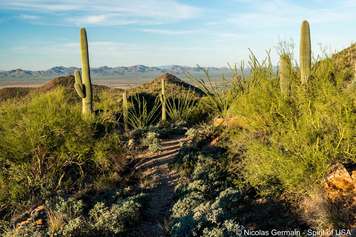 Montagnes et vallée vus de King Canyon Trail, Saguaro West