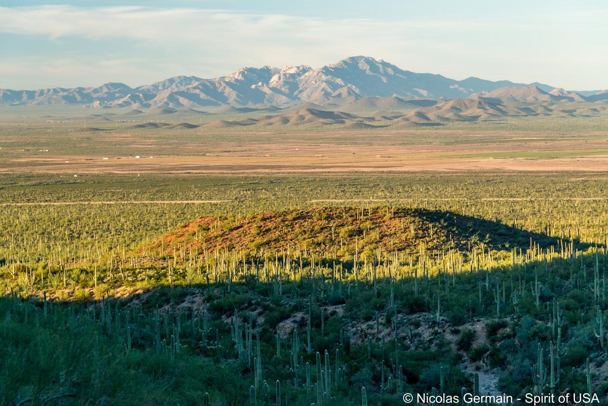 Forêt de cactus aux limites du parc vue de King Canyon Trail, Saguaro West
