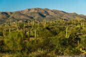 Paysage de Saguaro East