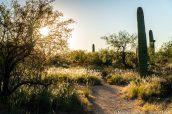 Squeeze Pen Trail en fin d'après-midi, Saguaro East