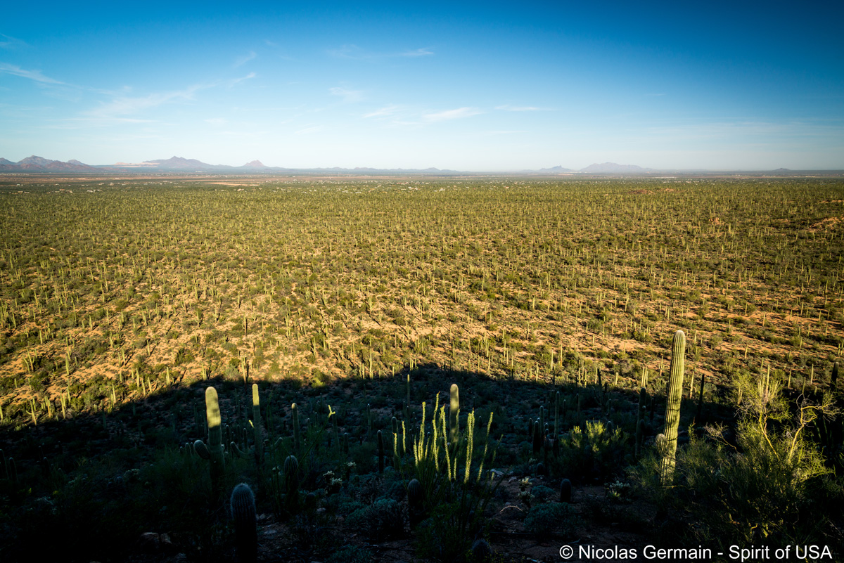 Panorama et saguaros à perte de vue au bout de Valley View Overlook Trail, Saguaro West