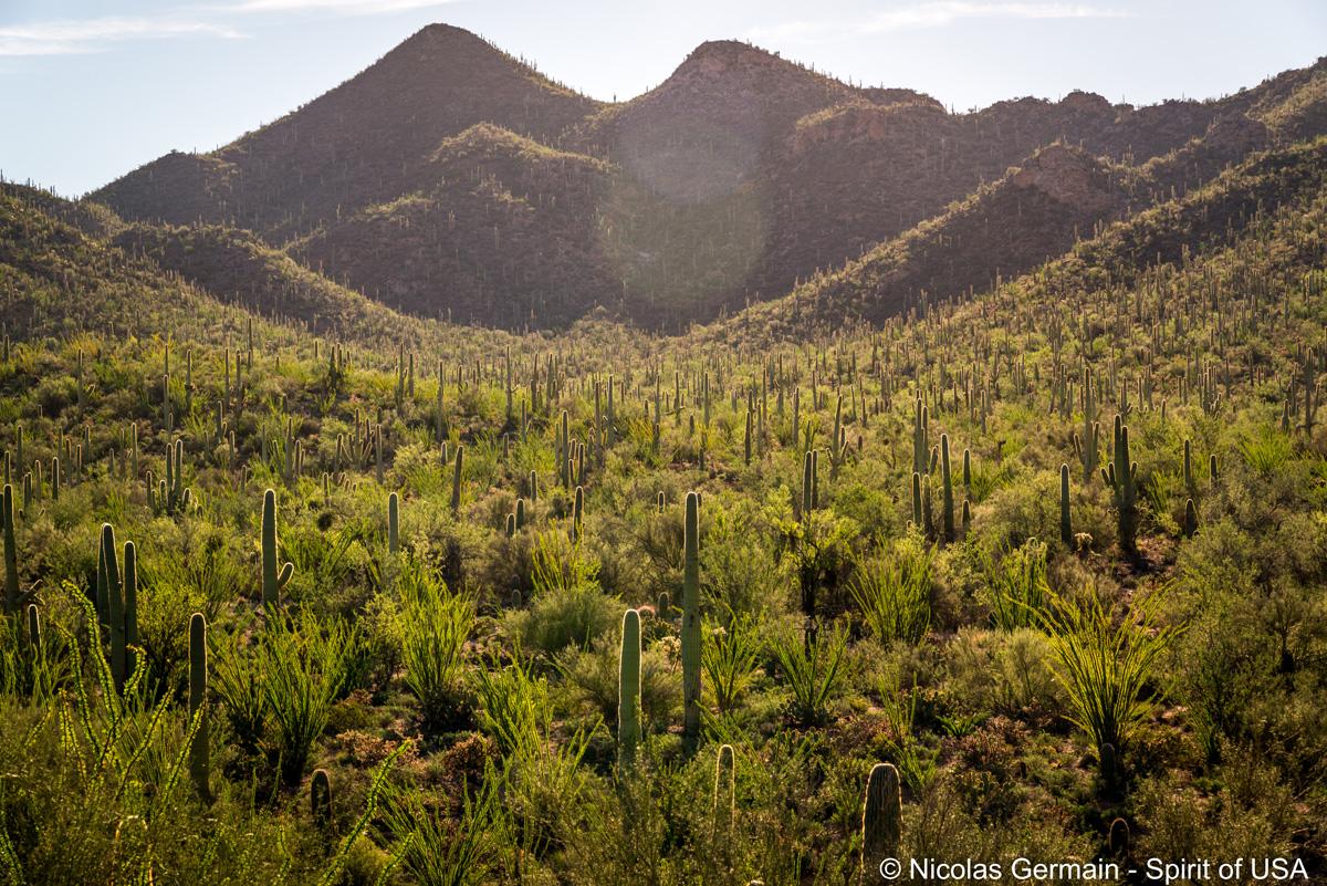 Vallée et forêt de saguaros le long de Valley View Overlook Trail, Saguaro West