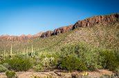 Cactus entourés de montagnes dans la partie ouest de Saguaro National Park