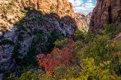 Couleurs automnales le long de la montée après Water Canyon vers White Domes