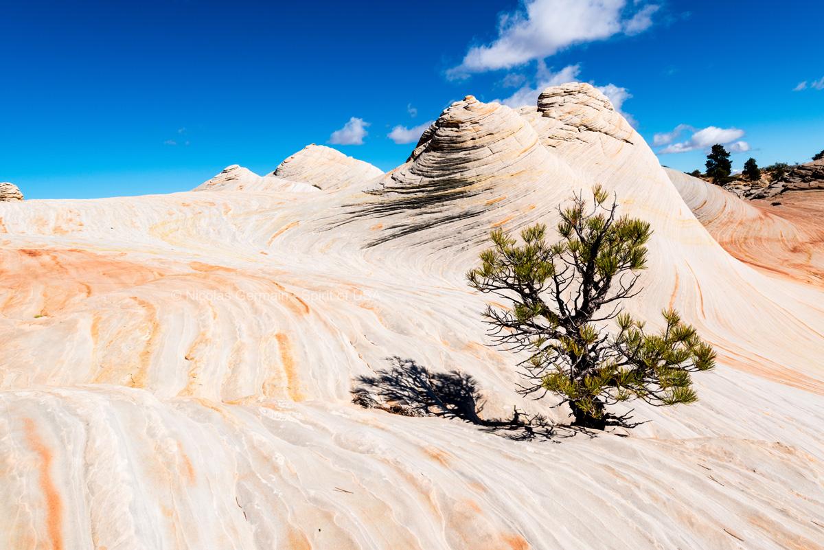 Quelques arbustes parviennent à pousser au milieu des roches de White Domes