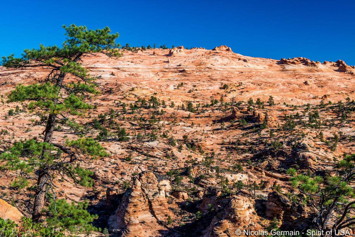 Vue sur l'étendue de slickrock à Top Rock, White Domes