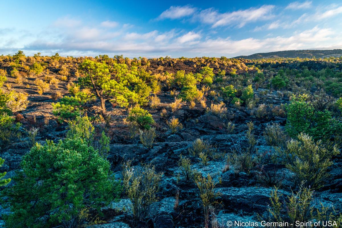 Au milieu du champ de lave de Lava Falls, El Malpais