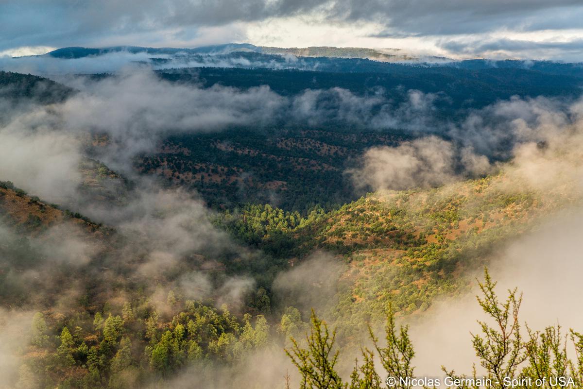 Vue sur les montagnes et la forêt au petit matin, le long de la route vers Gila Cliffs Dwelling
