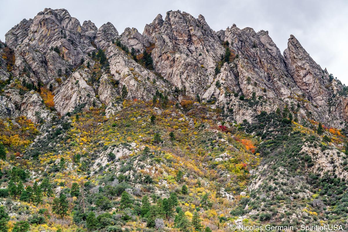 Organ Mountains et couleurs automnales vues de Pine Tree Trail, Nouveau-Mexique