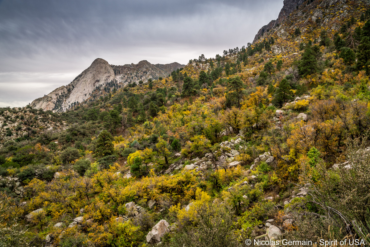 Pain de sucre dans les Organ Mountains, Nouveau-Mexique