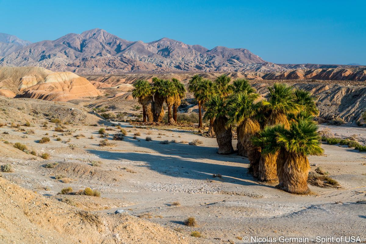 Oasis Seventeen Palms dans Anza Borrego Desert