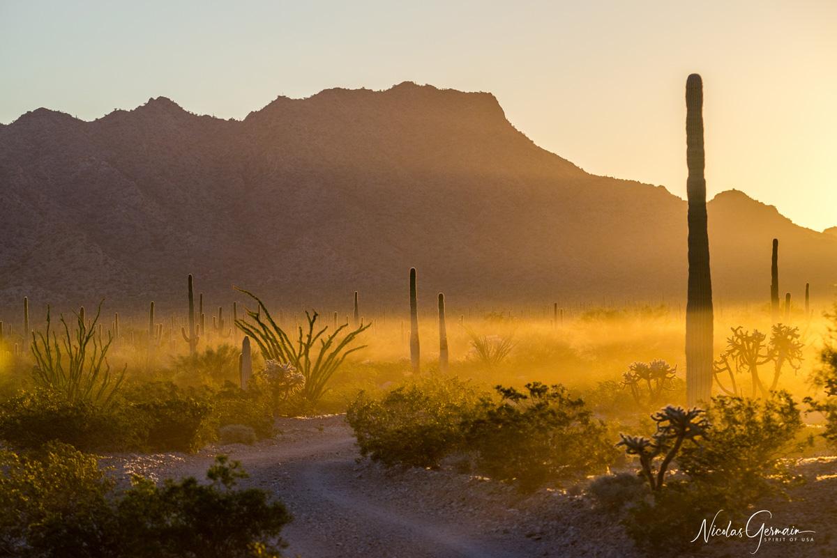 Lever de soleil sur la piste de Charlie Bell Pass dans Cabeza Prieta National Wildlife Refuge, Arizona