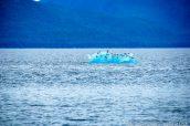 Mouettes sur un iceberg dans Holkham Bay, Alaska
