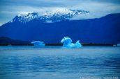 Un iceberg en forme d'hippocampe dans Holkham Bay, Alaska
