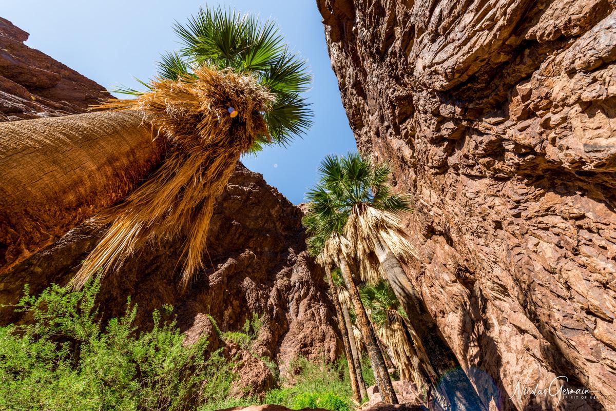Au coeur de l'oasis de Palm Canyon dans Kofa National Wildlife Refuge