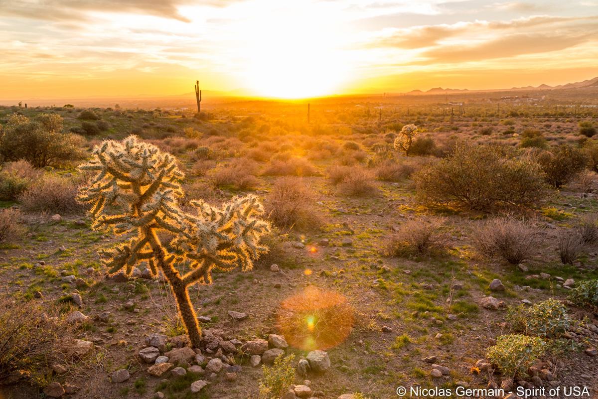 Un cholla cactus au coucher du soleil dans Lost Dutchman State Park, Arizona