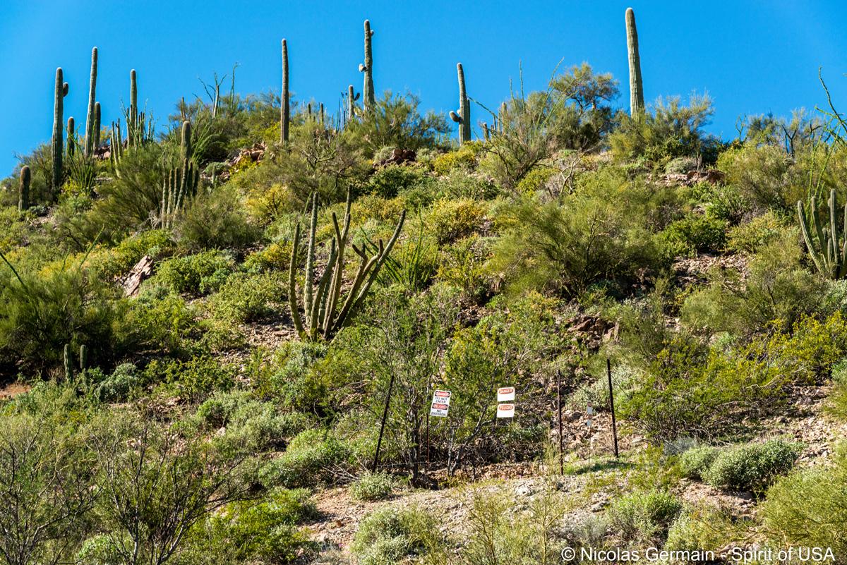 Entrée condamnée de Baker Mine, Organ Pipe Cactus