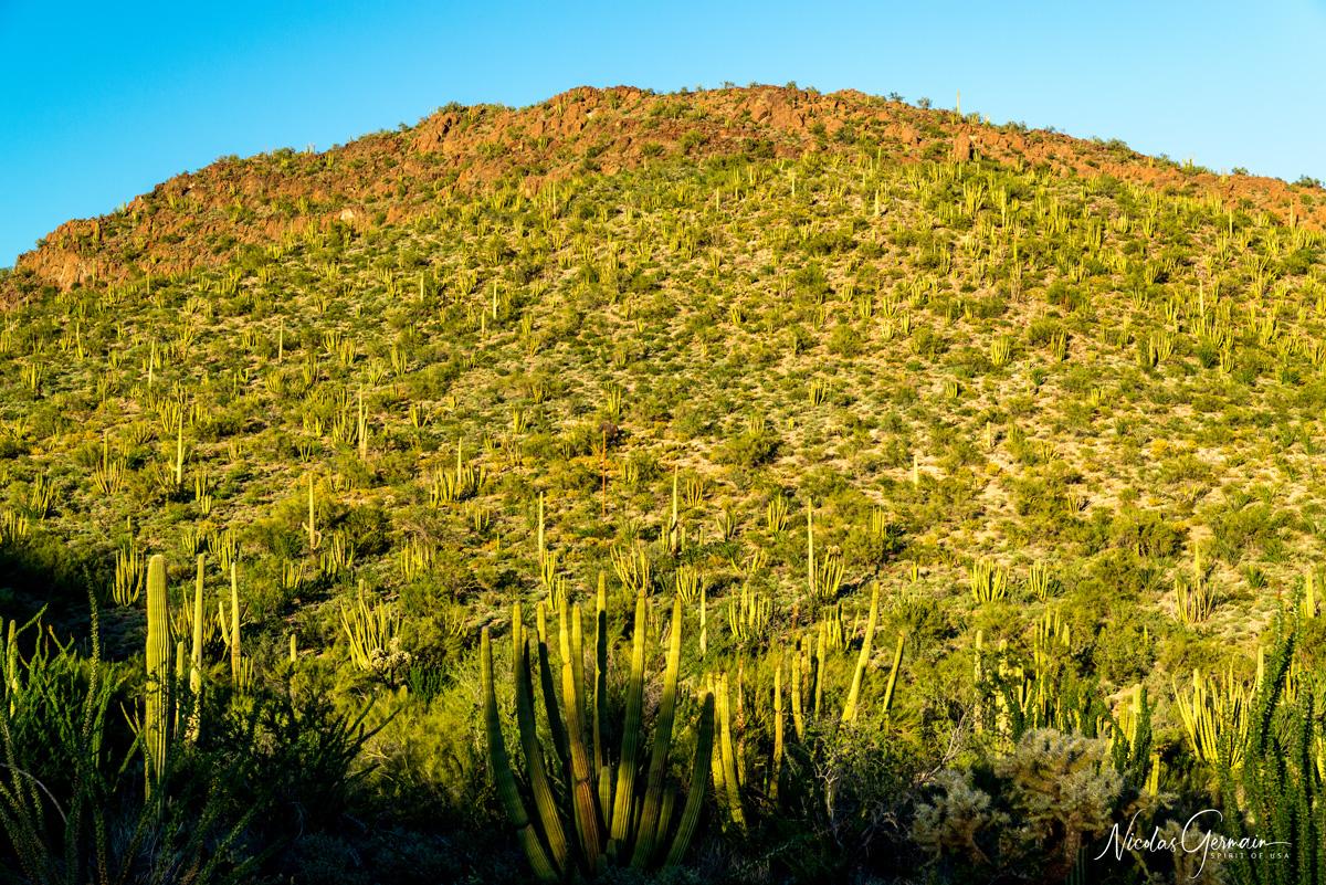Lumière de début de coucher de soleil à Desert View Trail, Organ Pipe Cactus