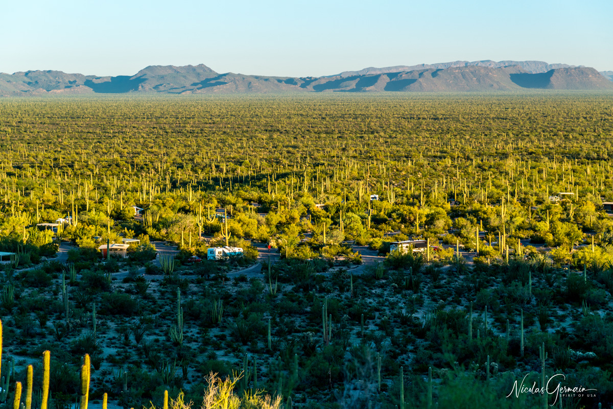 Vue sur le camping Twin Peaks Campground, Organ Pipe Cactus