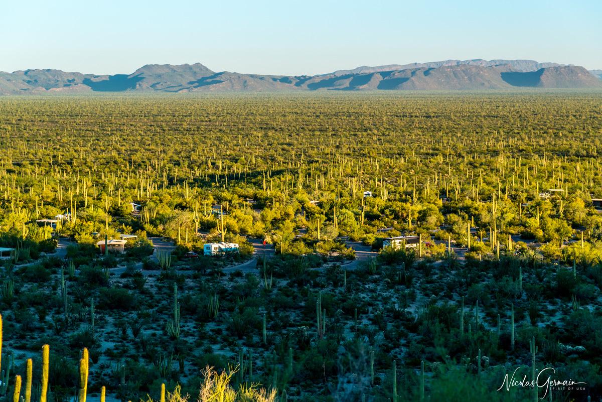Vue sur le camping Twin Peaks Campground, Organ Pipe Cactus