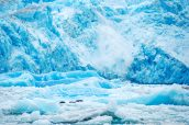 Un gros morceau de Sawyer Glacier se détache sous un bruit fracassant qui n'affole pas les phoques